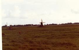 Hollow-post(?) mill, resembling Dutch meadow mill, at Itzehoe, near Wilster, West Germany