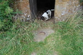 Dog, tower mill, Upper Tysoe