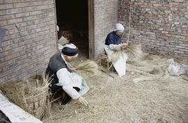 Jia Jiang Mill. Stripping Dragon Beard grass