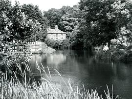 Costessey Mill, River Wensum