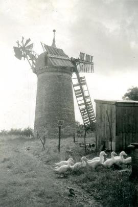 Old Bolingbroke Mill, Bolingbroke, with ducks