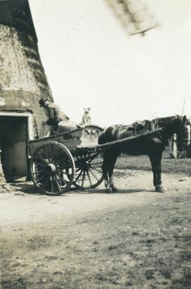 Mr Cobbin and dog in cart, Downham Road Mill, Ely