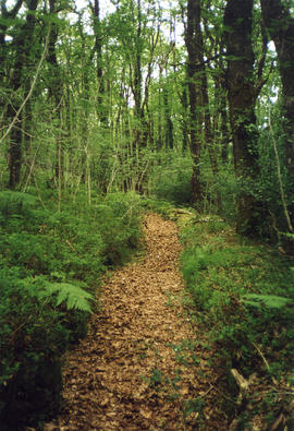 Yarner Woods, Bovey Tracey, pottery leat