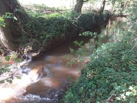 Site of Knights Mill, Bishops Caundle, mill leat at point of entry to former wheel pit