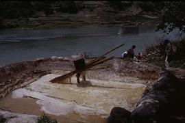 China, Kaili. Ping Liang, taking bamboo from soaking pit.