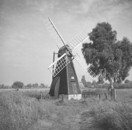 Norman's Mill, Wicken Fen, with silver birch
