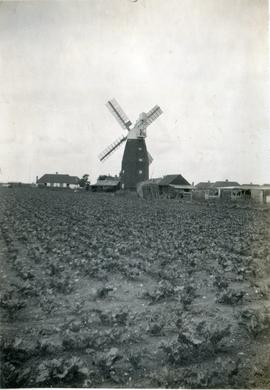 View from Ploughed Field, Downfield Mill, Soham