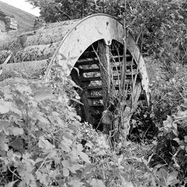 Undershot wheel overgrown with vegetation, Hyde Farm Wheel, Bere Regis