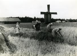 Toe mill and workers in field around it in Alastaro, Satakunta