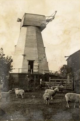 Field Mill, Charing, without a sail, sheep in the foreground