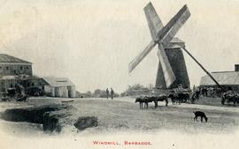 Mill, carts and oxen, Barbados