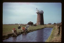 Tower mill, Horsey, preserved with sails and fan missing