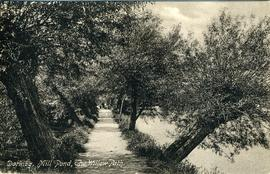 Dorking, Mill Pond, The Willow Path