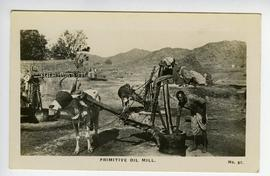 Two oxen turning oil ghani