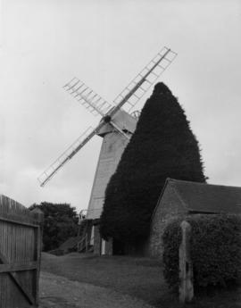 North Common Mill, Chailey, showing fir tree