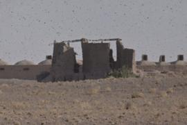 Group of windmills probably near Islam Qala (closeup)