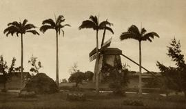 Mill and palm trees, Barbados