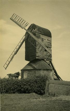 Post mill, Mountnessing, derelict, with horses