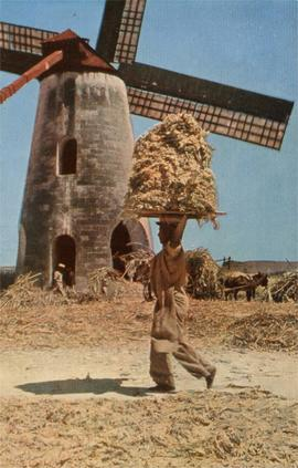 Mill and cane carrier, Barbados