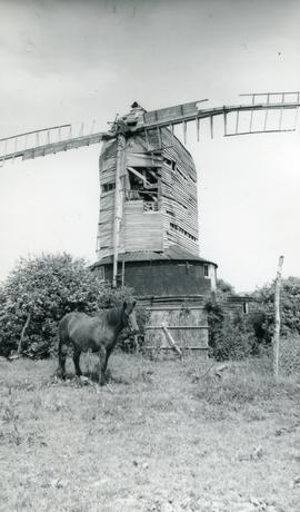 Horse, Downs Mill, Bexhill
