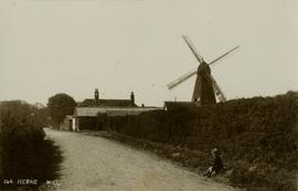 Smock mill, Herne, behind hedge as seen from the road